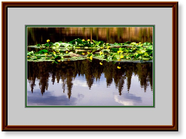 This Image is of a small lake in the Gore Range with a Lilypad Reflecion, Summit County, Colorado